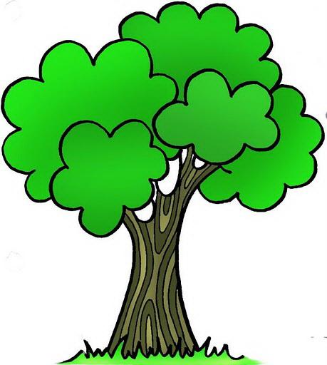 Zmiana przepisów w zakresie usuwania drzew i krzewów !