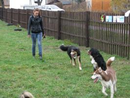 Eko Wybieg dla psów już otwarty! :)